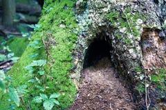 Ein Loch in einem Baum für? stockfotos