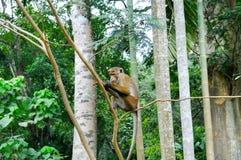 Ein lustiger Affe sitzt auf einem Baumast im natürlichen Dschungel Stockbild