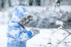 Ein Mädchen betrachtet eine Niederlassung einer Eberesche im Winter stockbild