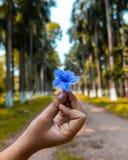Ein Mädchen, das eine schöne blaue Blume in tge Mitte eines Waldes in Indien hält stockfotografie