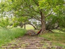 Ein Mädchen, das in einem grünen Park auf der alten Treppe im Schatten eines ausgebreiteten Baums stillsteht lizenzfreie stockfotos