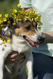 Hund, der einen Kranz der Blumen trägt Lizenzfreie Stockfotografie