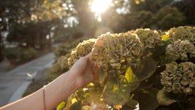 Ein Mädchen, das in einen Sommerpark geht, berührt eine ungewöhnliche schöne Anlage einer Blume stock video