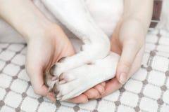 Ein Mädchen, das ein Hund-` s Tatzen hält lizenzfreies stockbild