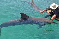 Ein Mädchen in einem Hut, der die Delphine streicht, die in das Meer schwimmen Erhaltung und Schutz von Tieren in Delphin Riff, I stockbild