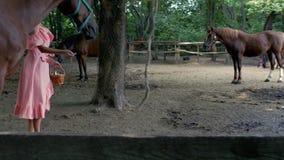 Ein Mädchen in einem rosa Kleid und in einer rosa Sonnenbrille zieht ein Pferd von einem Weidenkorb mit Äpfeln in der Koppel ein  stock footage