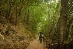 Ein Mädchen ging in den Bambusgarten Lizenzfreies Stockfoto
