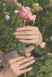 Ein Mädchen hält Rosarosenblume durch Hände mit beauti Lizenzfreie Stockfotos