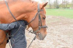Ein Mädchen mit einer Umarmung umarmt den Kopf eines Pferds Lizenzfreies Stockbild