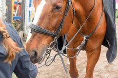 Ein Mädchen mit einer Umarmung umarmt den Kopf eines Pferds Lizenzfreie Stockbilder