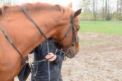 Ein Mädchen mit einer Umarmung umarmt den Kopf eines Pferds Lizenzfreies Stockfoto