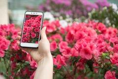 Ein Mädchen nimmt auf blühenden Azaleen des Telefons Stockbilder