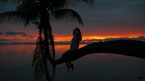 Ein Mädchen sitzt auf einer Palme auf einem Hintergrund des roten Sonnenuntergangs auf der Küste stock video footage