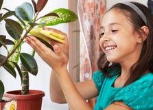 Ein Mädchen wischt den Staub von den Blättern ab Stockbild