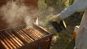 Ein Mädchenimker in einem weißen Schutzanzug stößt oben der Bienenstock luft, damit die Bienen weniger aggressiv werden stock footage
