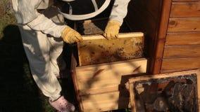 Ein Mädchenimker in einem weißen Schutzanzug zieht einen Holzrahmen mit Bienenwaben aus, auf denen Bienen vom Bienenstock krieche stock footage