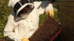 Ein Mädchenimker in einer schützenden weißen Klage überprüft einen Rahmen mit Bienenwaben, auf denen die Bienen kriechen stock video