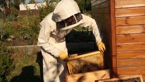 Ein Mädchenimker in einer schützenden weißen Klage überprüft einen Rahmen mit Bienenwaben, auf denen die Bienen kriechen stock video footage
