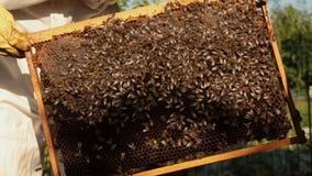 Ein Mädchenimker in einer schützenden weißen Klage überprüft einen Rahmen mit Bienenwaben, auf denen die Bienen kriechen stock footage