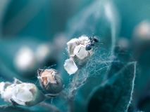 Ein macrophotography einer schönen einzelnen Blume und der Ameise stockfotografie