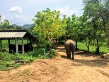 Ein Mahout, der seinen Elefanten durch den Boden von ElephantsWorld außerhalb Kanchanaburi Thailand reitet stockfoto