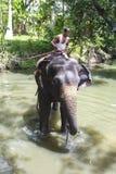 Ein Mahout reitet seinen Elefanten im Fluss Lizenzfreie Stockfotografie
