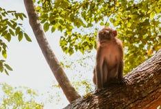 Ein Makakenaffe auf Baum Lizenzfreie Stockfotos
