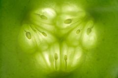 Gurken-Scheibe-Makro stockfotografie