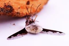 Ein Makroschuß der Fahrwerkbeine einer Biene Stockfoto