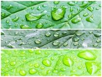 Ein Makroschuß der nassen Blätter Lizenzfreie Stockfotografie