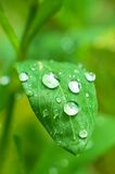 Ein Makroschuß des nassen Blattes Stockbild