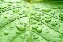 Ein Makroschuß des nassen Blattes Stockbilder