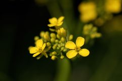 Ein Makroschuß einer kleinen gelben Blume lizenzfreie stockbilder