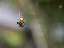 Spinnenessen Makro lizenzfreie stockfotografie