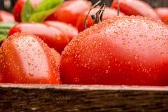 Ein Makroschuß von Tomaten mit Waterdrops Lizenzfreie Stockfotografie
