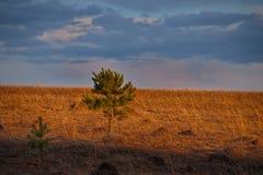 Ein malerischer Frühlingssonnenuntergang über den sibirischen Feldern stockfoto
