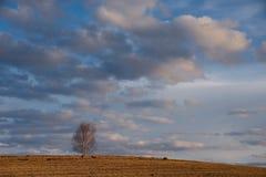 Ein malerischer Frühlingssonnenuntergang über den sibirischen Feldern stockfotografie