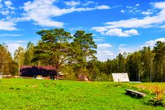 Ein malerischer Platz am Waldsommertag stockfoto