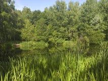 Ein malerischer Teich mit überwucherten grünen Banken im Stadt Park Stockfoto