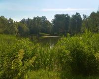 Ein malerischer Teich mit überwucherten grünen Banken im Stadt Park Lizenzfreie Stockfotos