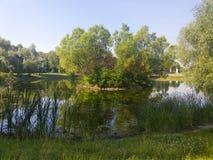 Ein malerischer Teich mit überwucherten grünen Banken im Stadt Park Stockfotografie