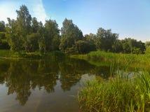 Ein malerischer Teich mit überwucherten grünen Banken im Stadt Park Stockbild