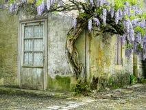Ein malerisches Dorfhaus mit blühender Frühlingsblume Lizenzfreie Stockbilder