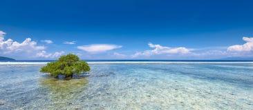 Ein Mangrovenbaum auf einem Korallenriff Stockfotografie