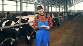 Ein Mann arbeitet mit einer Tablette in einem Kuhstall und steht nahe einer Herde stock footage