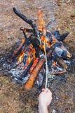Ein Mann brät Würste gegen das Gras auf einem Wald des Lagerfeuers im Frühjahr im Rahmen von einer Hand lizenzfreie stockfotos