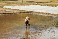 Ein Mann, der auf dem Reisgebiet in Vietnam-Landschaft arbeitet stockfotos