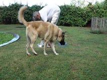 Ein Mann, der seine Hunde in einem tropischen Garten einzieht stock video