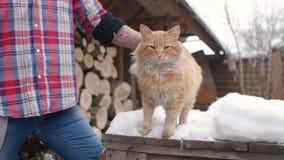 Ein Mann in einem karierten Hemd, das eine Katze streicht stock video