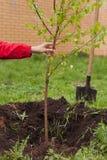 Ein Mann in einer roten Jacke pflanzt einen kleinen Baum im Freien Stockfotos